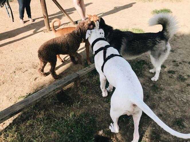 doggyparkpowwow